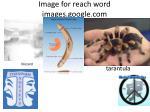 image for reach word images google com