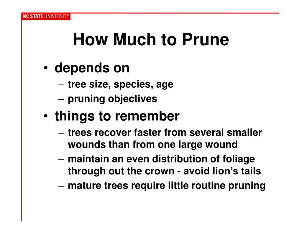 How Much to Prune