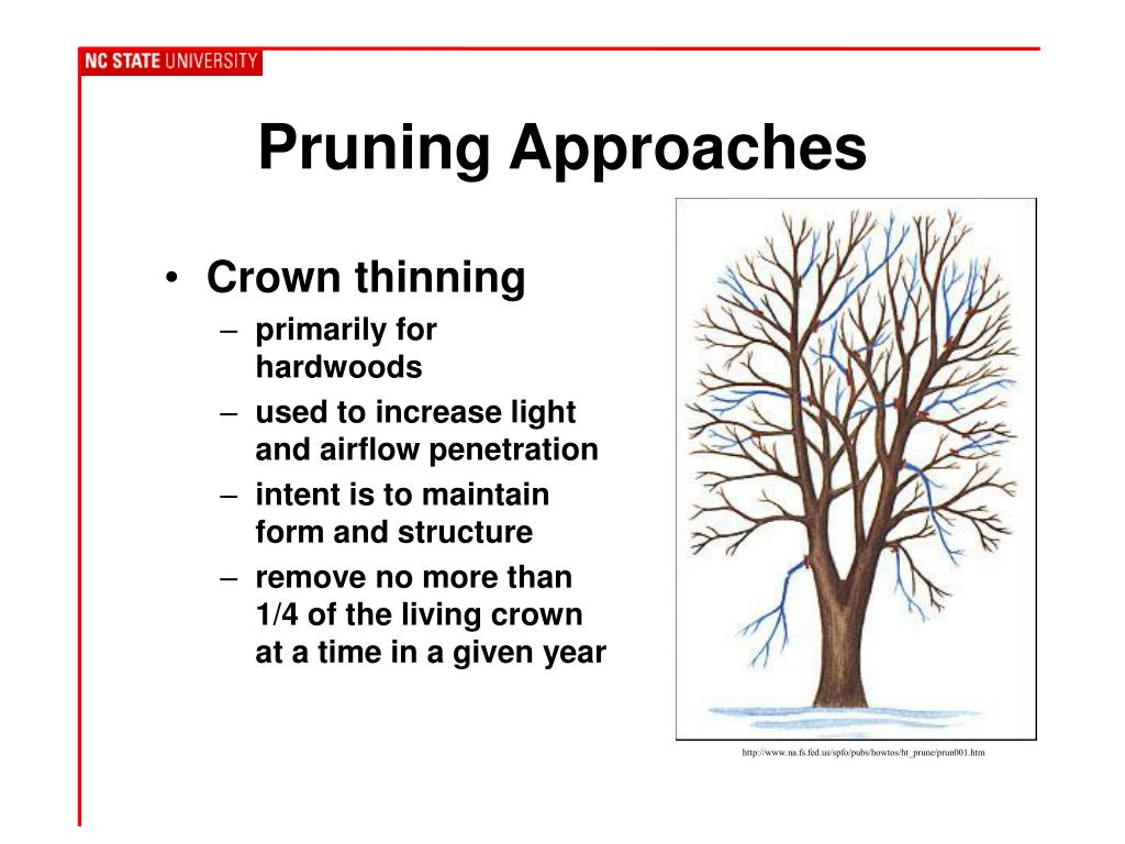 Pruning Approaches