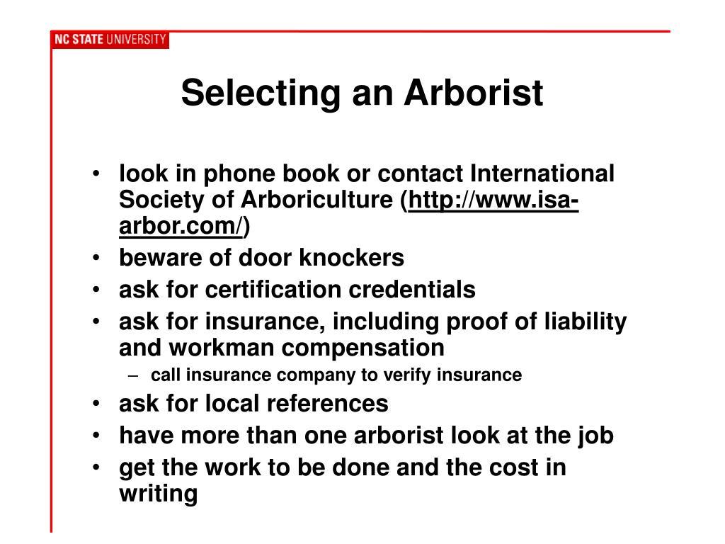 Selecting an Arborist