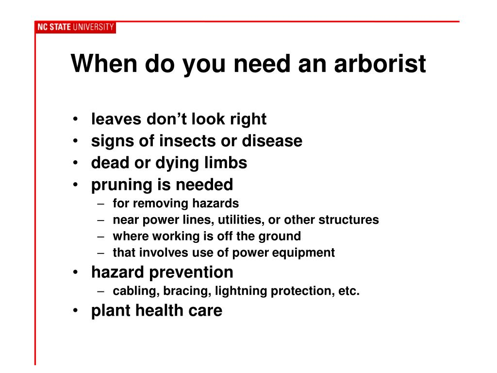 When do you need an arborist