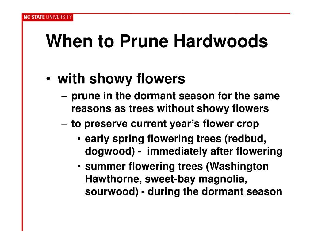 When to Prune Hardwoods