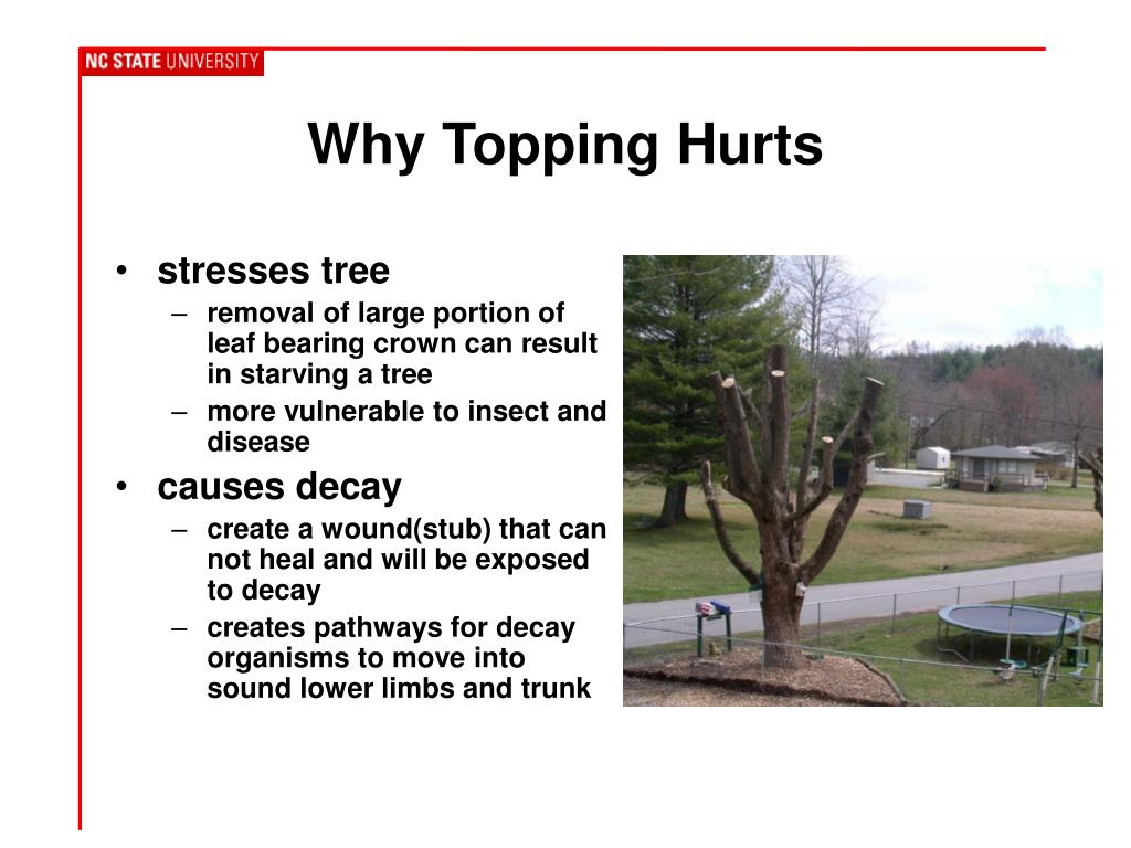 Why Topping Hurts