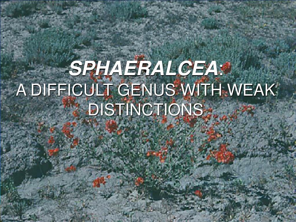 SPHAERALCEA