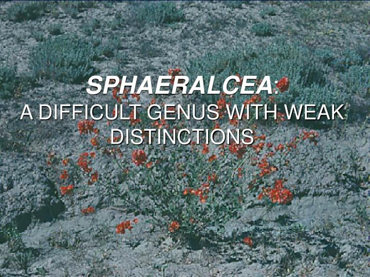 Sphaeralcea a difficult genus with weak distinctions