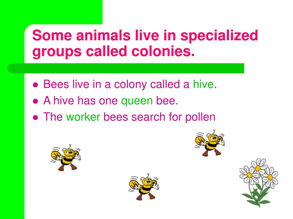 Some animals live in specialized groups called colonies.