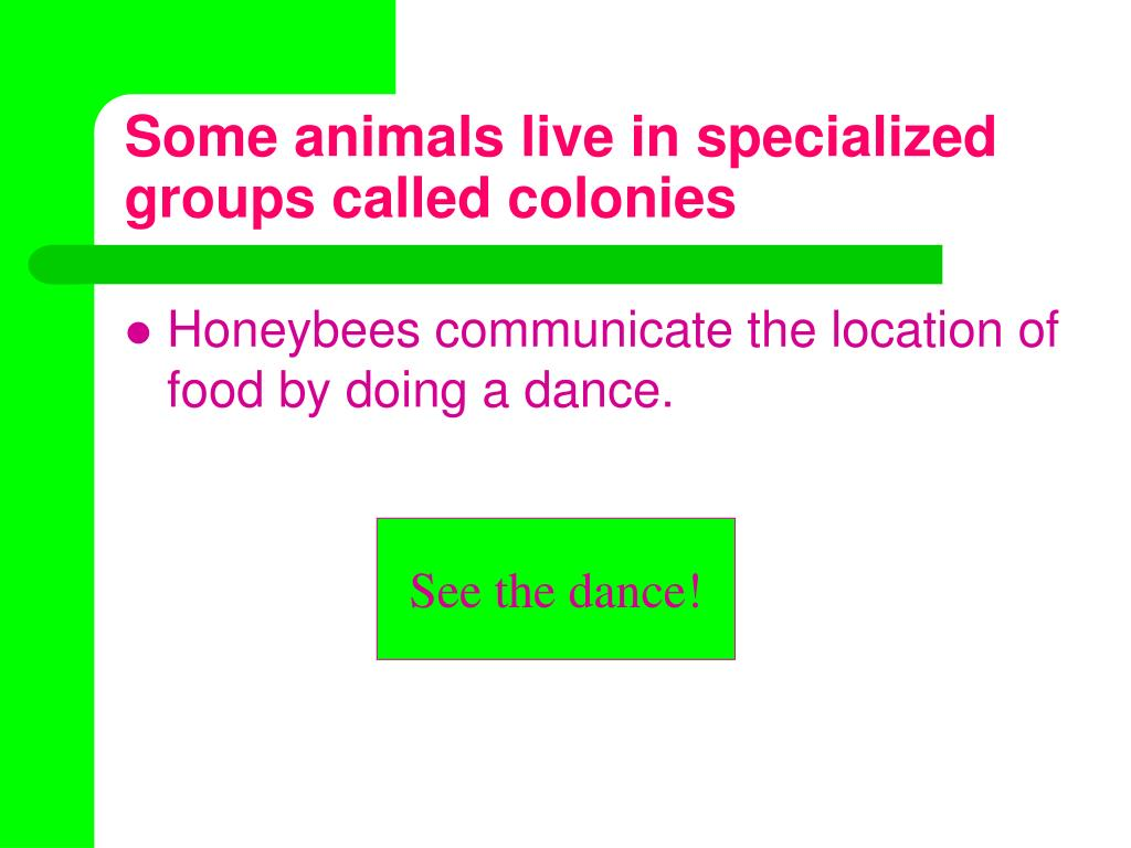Some animals live in specialized groups called colonies