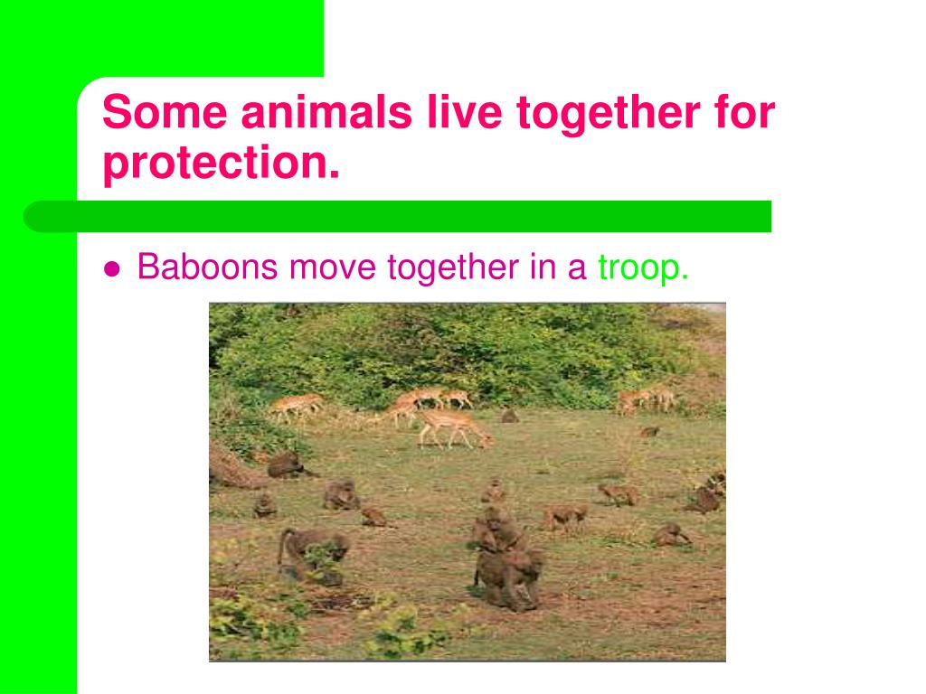 Some animals live together for protection.