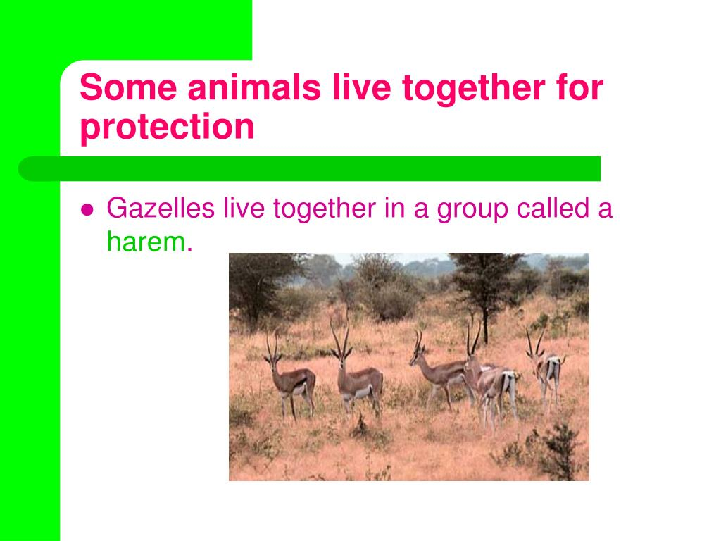 Some animals live together for protection