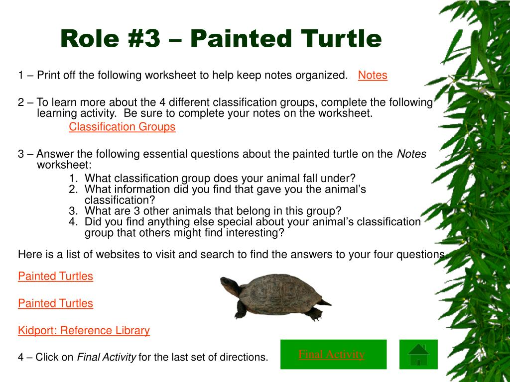 Role #3 – Painted Turtle