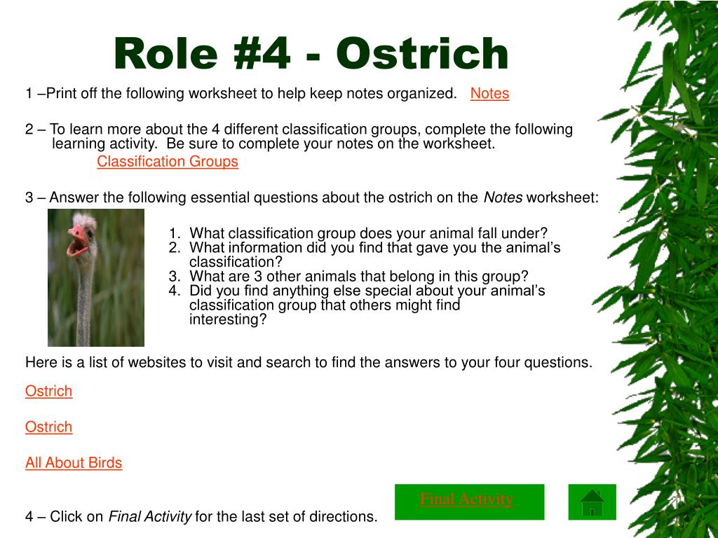 Role #4 - Ostrich