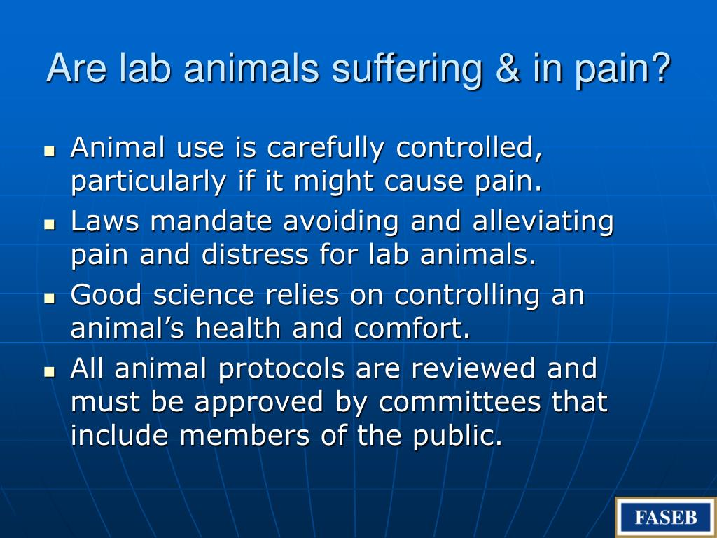 Are lab animals suffering & in pain?