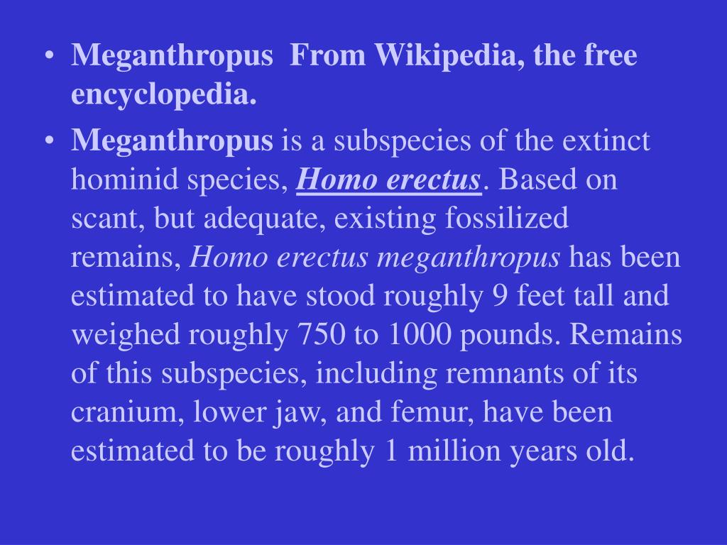 Meganthropus  From Wikipedia, the free encyclopedia.
