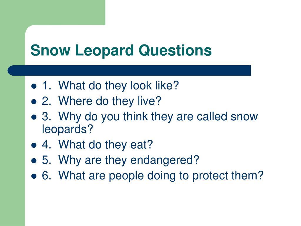Snow Leopard Questions
