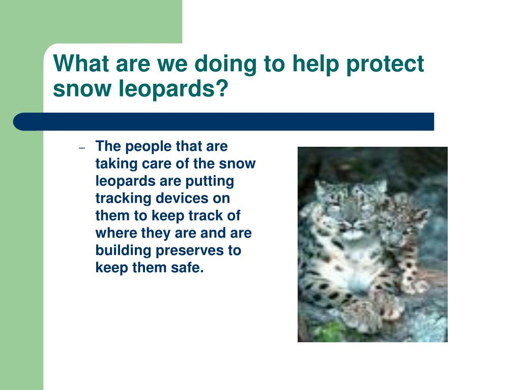 What are we doing to help protect snow leopards?
