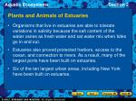 plants and animals of estuaries11