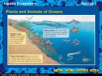plants and animals of oceans23