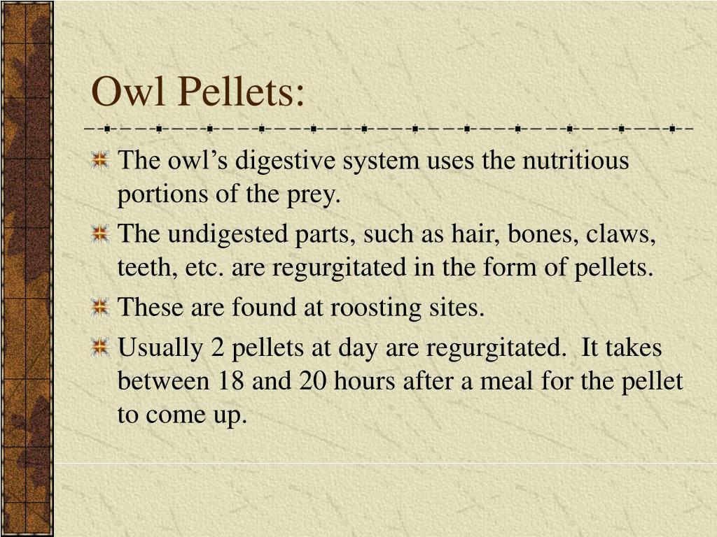 Owl Pellets: