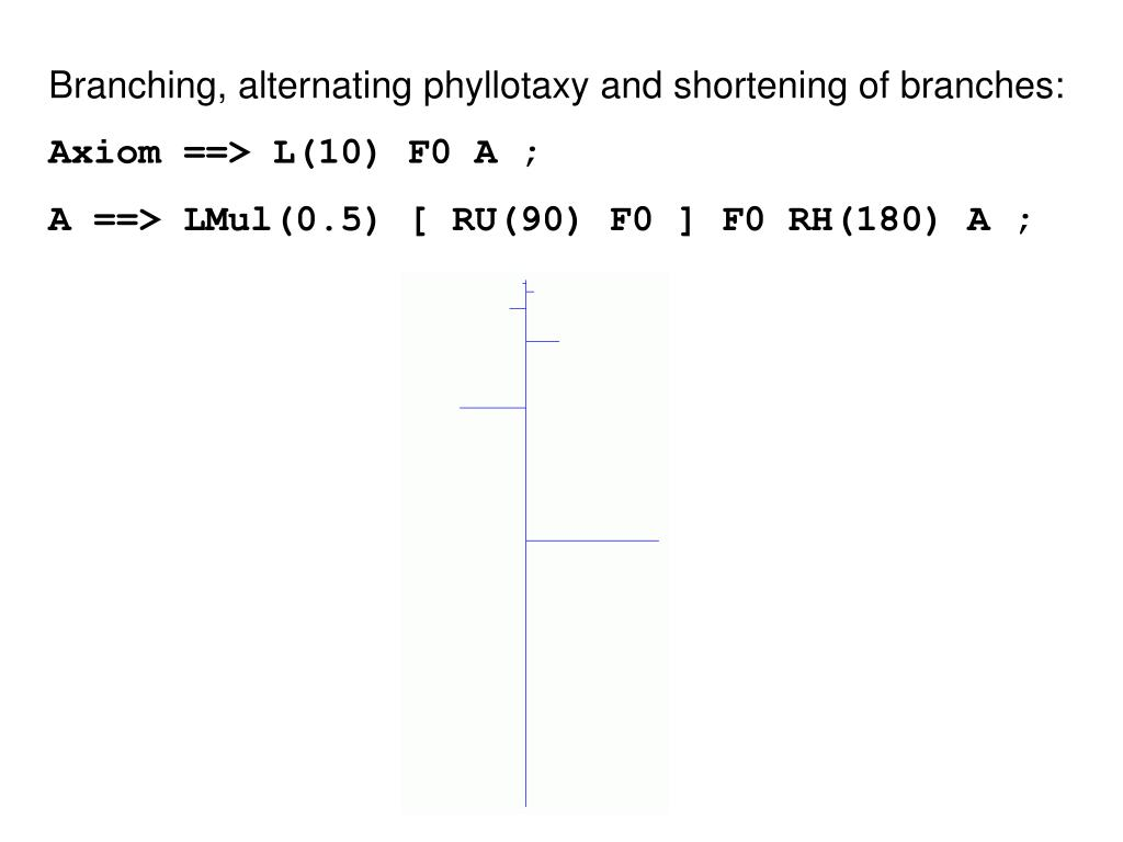 Branching, alternating phyllotaxy and shortening of branches: