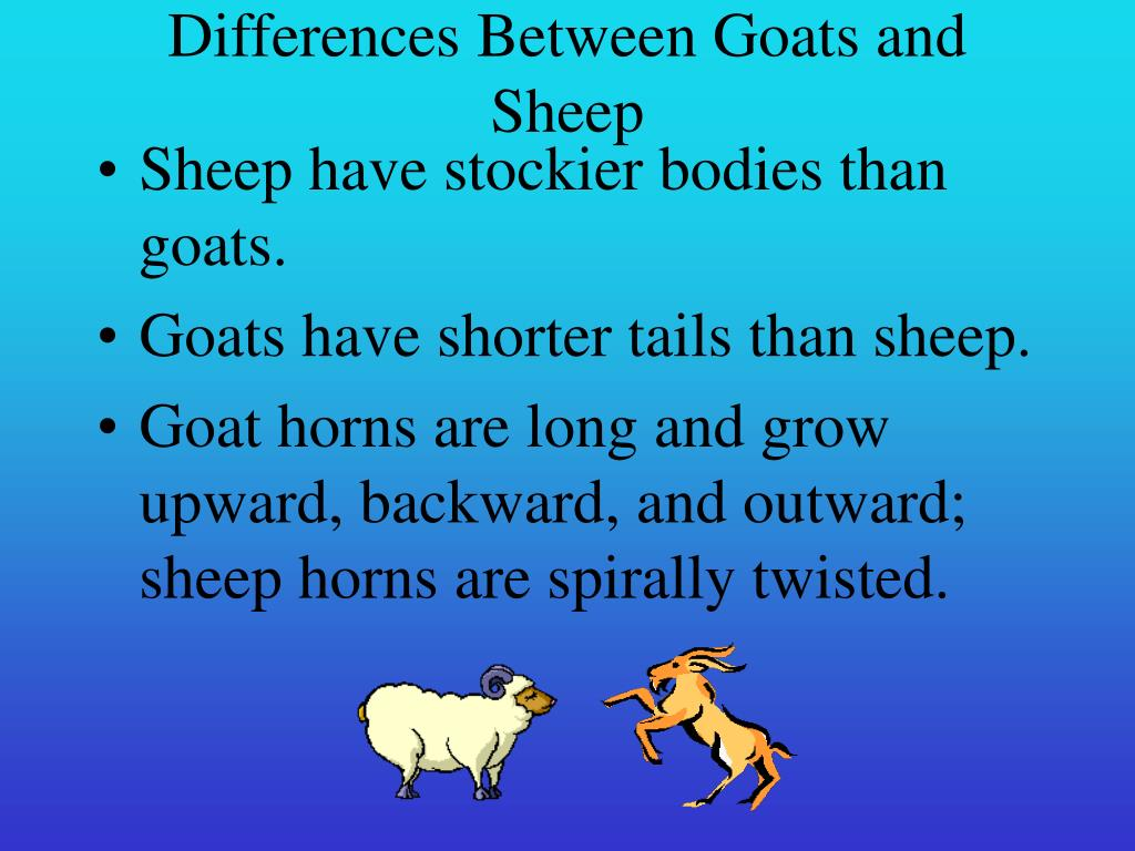 Differences Between Goats and Sheep