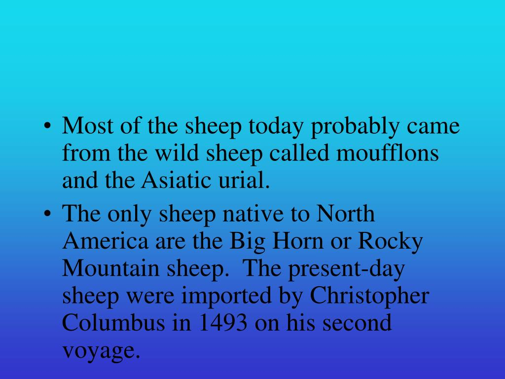 Most of the sheep today probably came from the wild sheep called moufflons and the Asiatic urial.