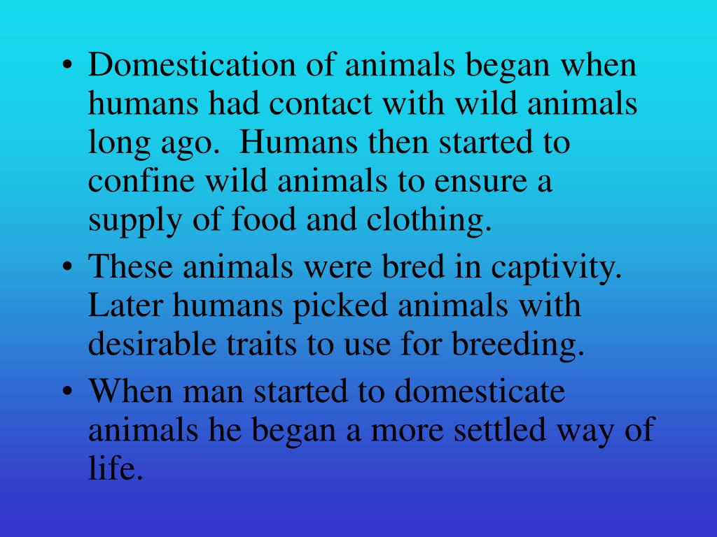 Domestication of animals began when humans had contact with wild animals long ago.  Humans then started to confine wild animals to ensure a supply of food and clothing.