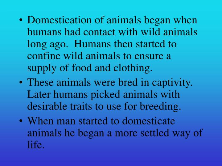 Domestication of animals began when humans had contact with wild animals long ago.  Humans then star...