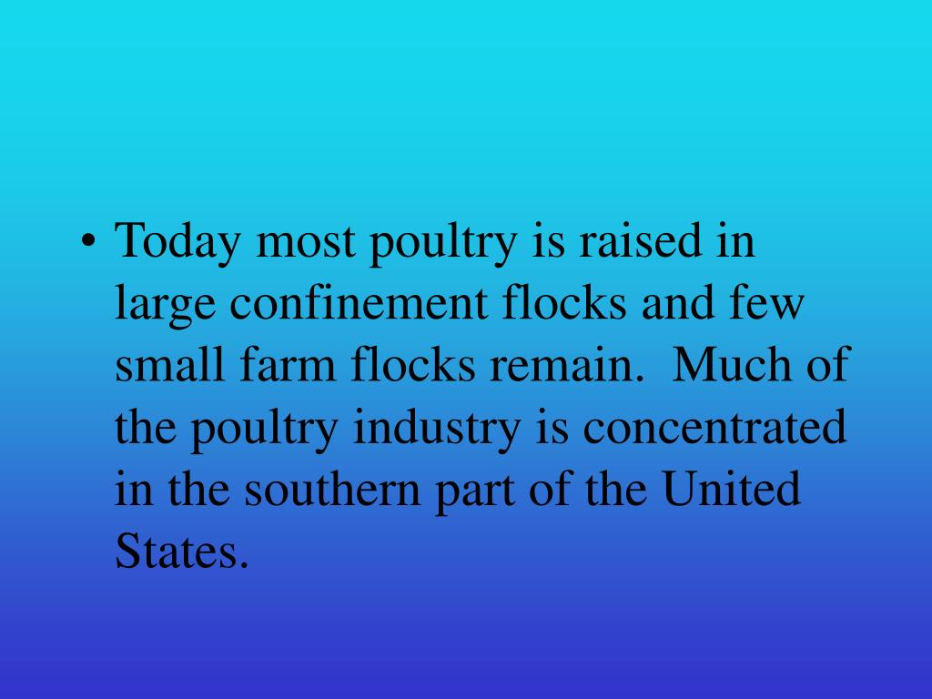Today most poultry is raised in large confinement flocks and few small farm flocks remain.  Much of the poultry industry is concentrated in the southern part of the United States.