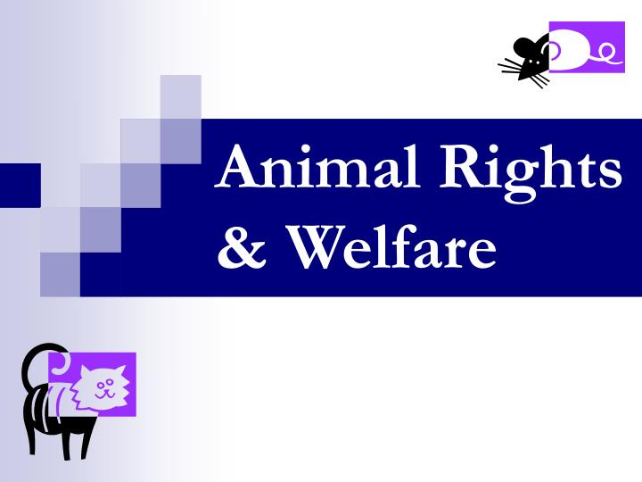 Animal rights welfare l.jpg