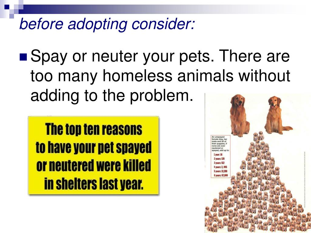 before adopting consider: