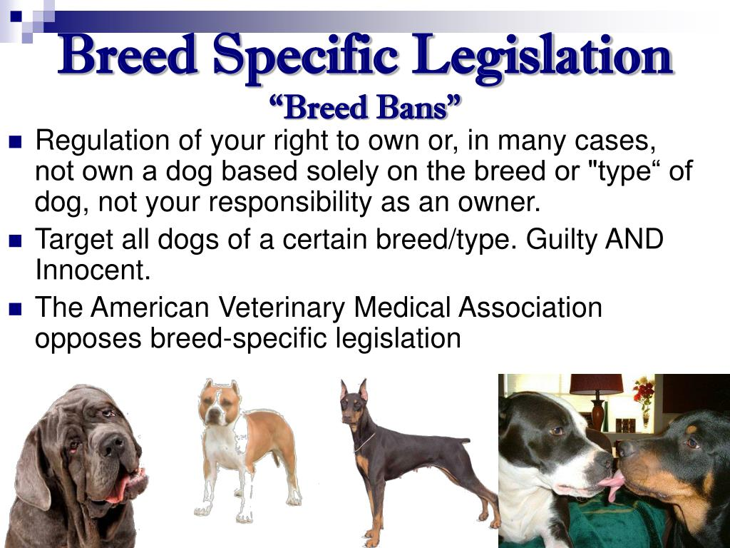 Breed Specific Legislation