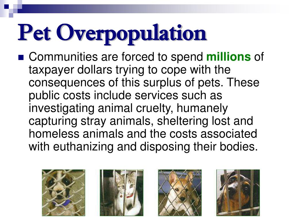 Pet Overpopulation