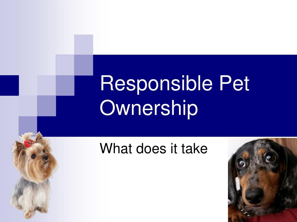 Responsible Pet Ownership