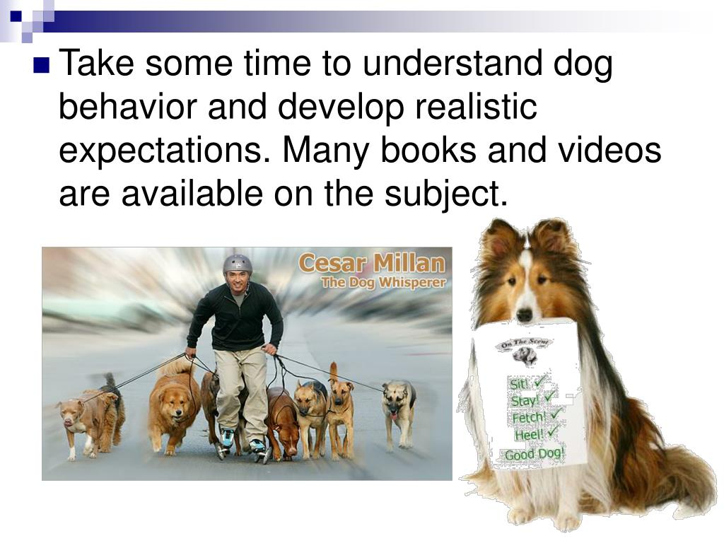 Take some time to understand dog behavior and develop realistic expectations. Many books and videos are available on the subject.