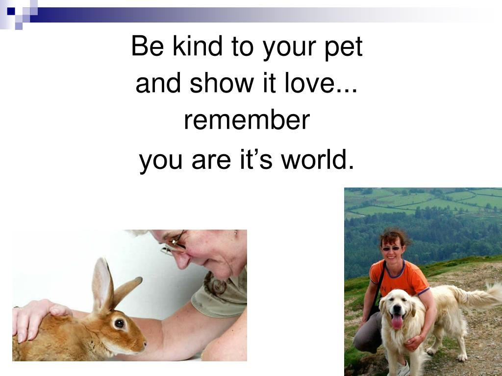 Be kind to your pet