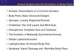 animal origins and the evolution of body plans2