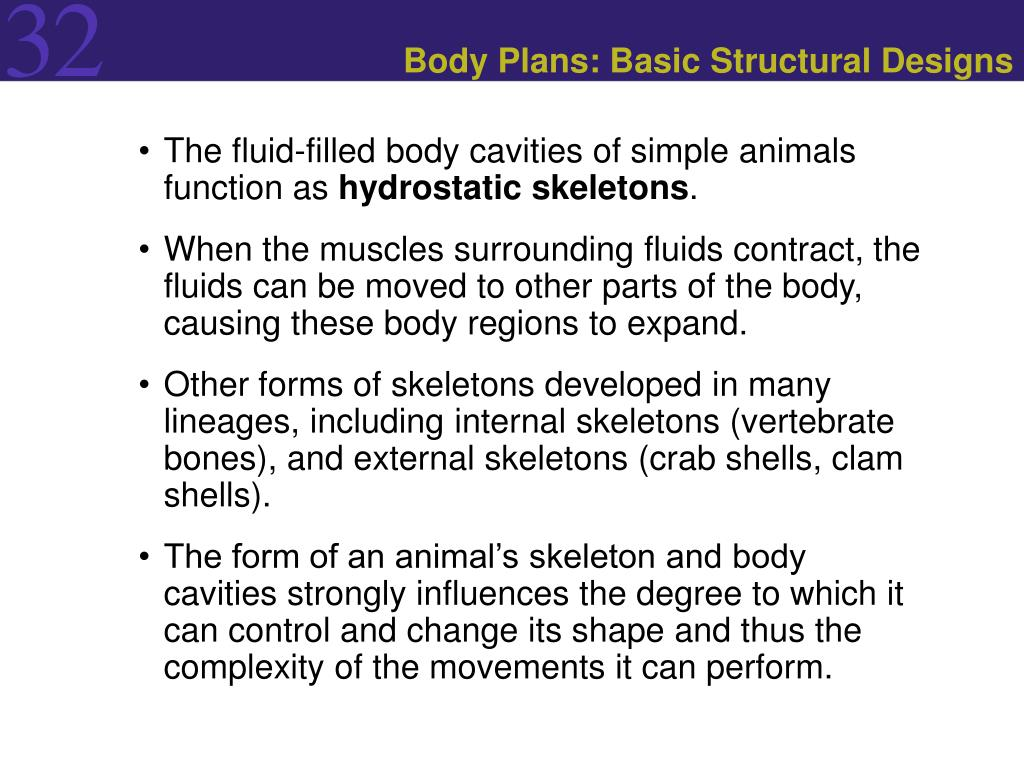 Body Plans: Basic Structural Designs