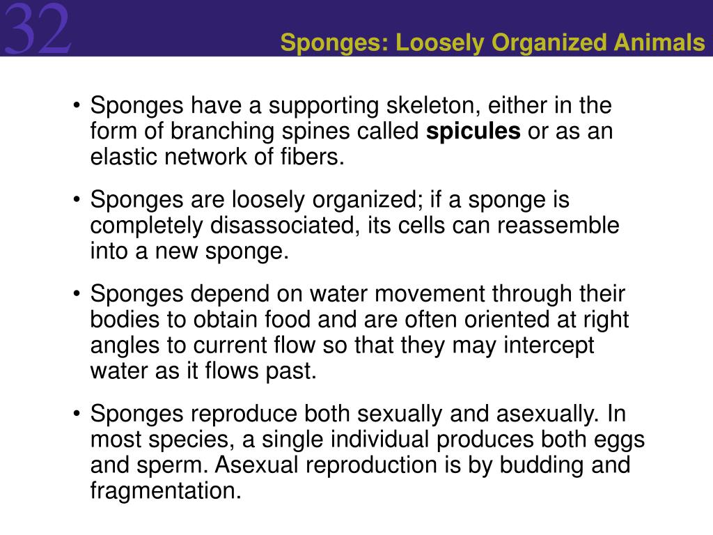 Sponges: Loosely Organized Animals