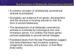 the evolution of bilaterally symmetrical animals