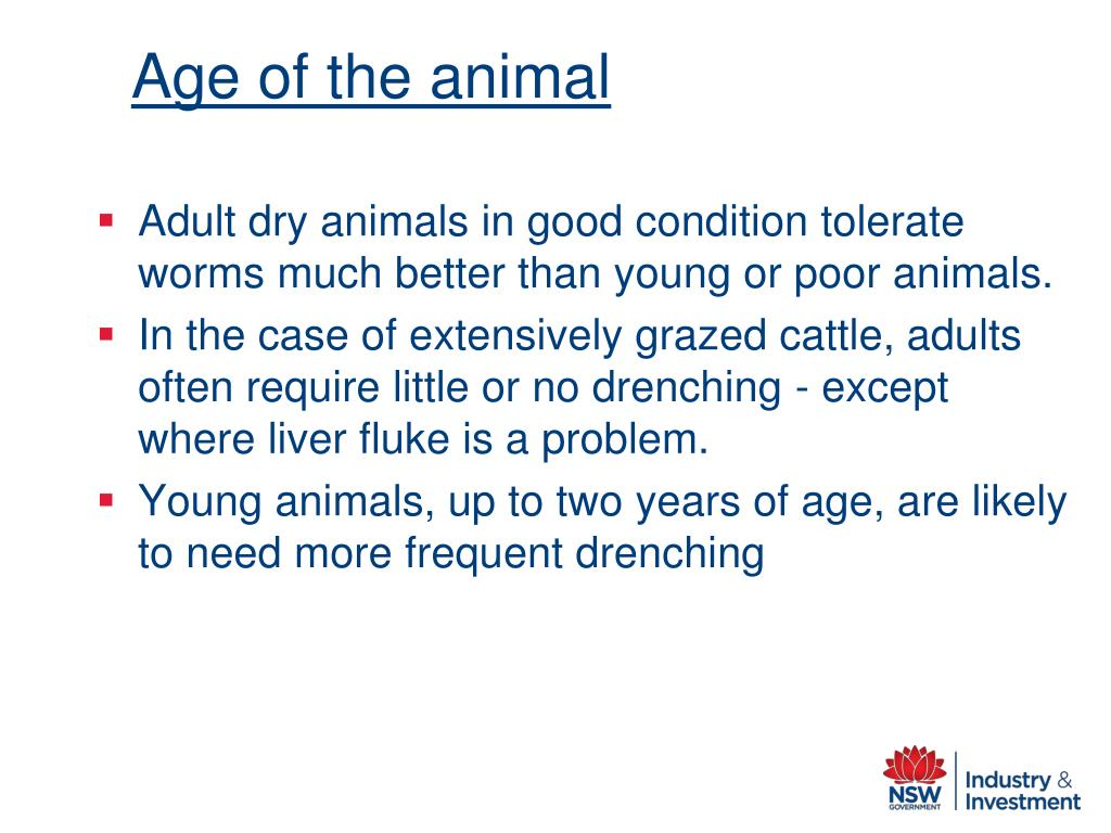 Age of the animal