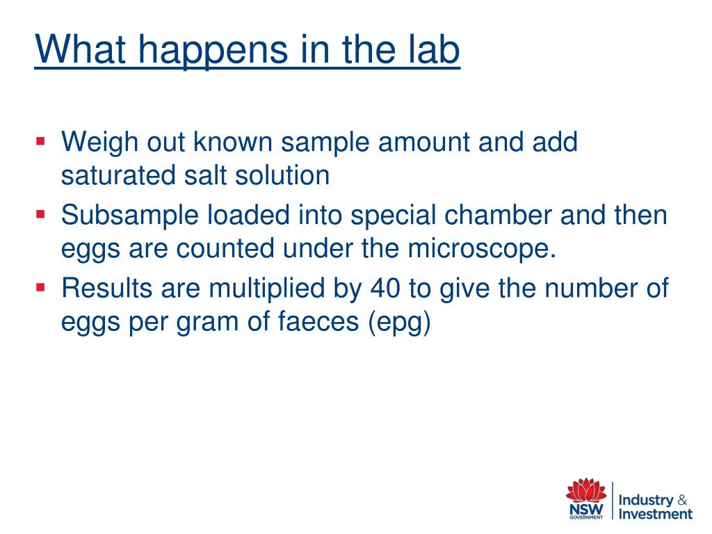 What happens in the lab