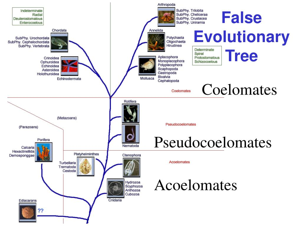 False   Evolutionary