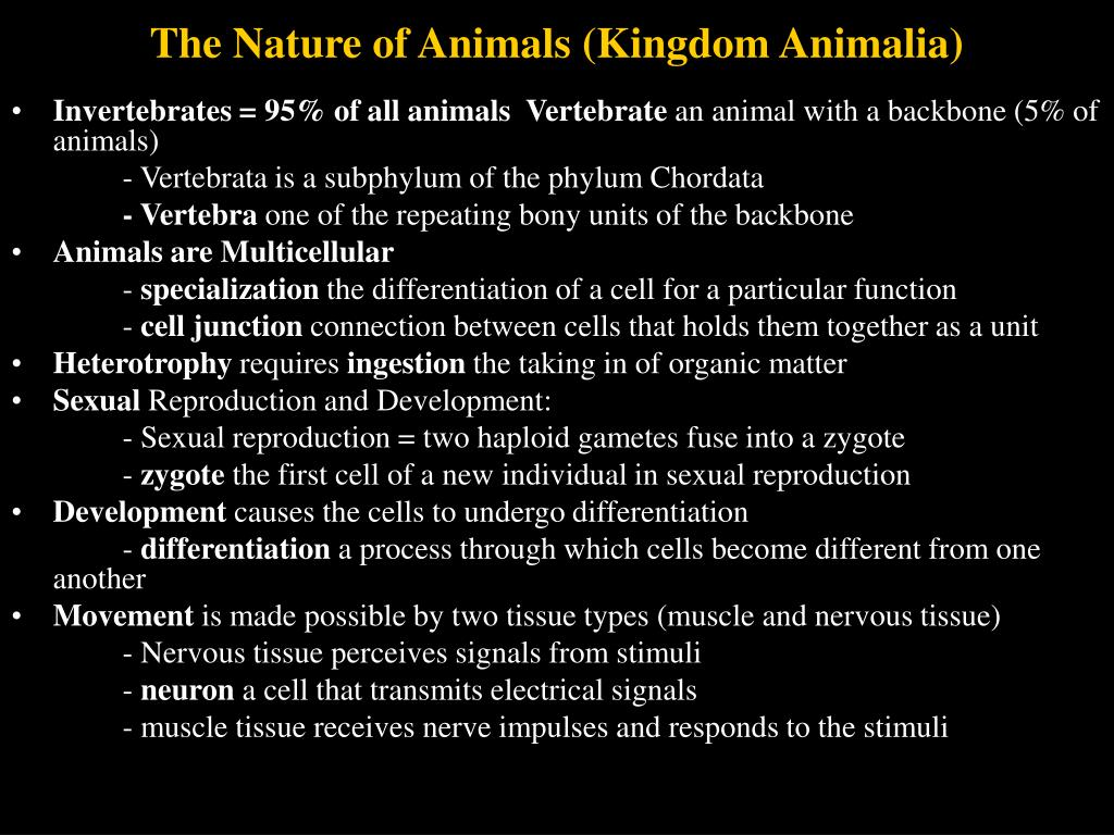 The Nature of Animals (Kingdom Animalia)