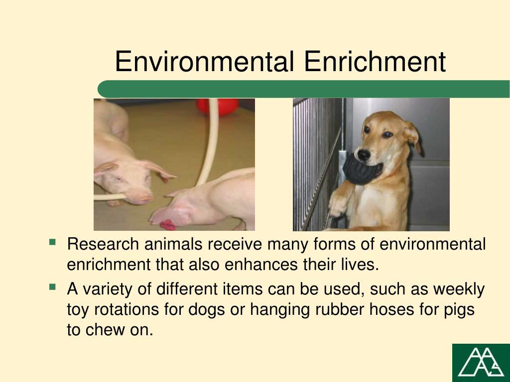 Environmental Enrichment