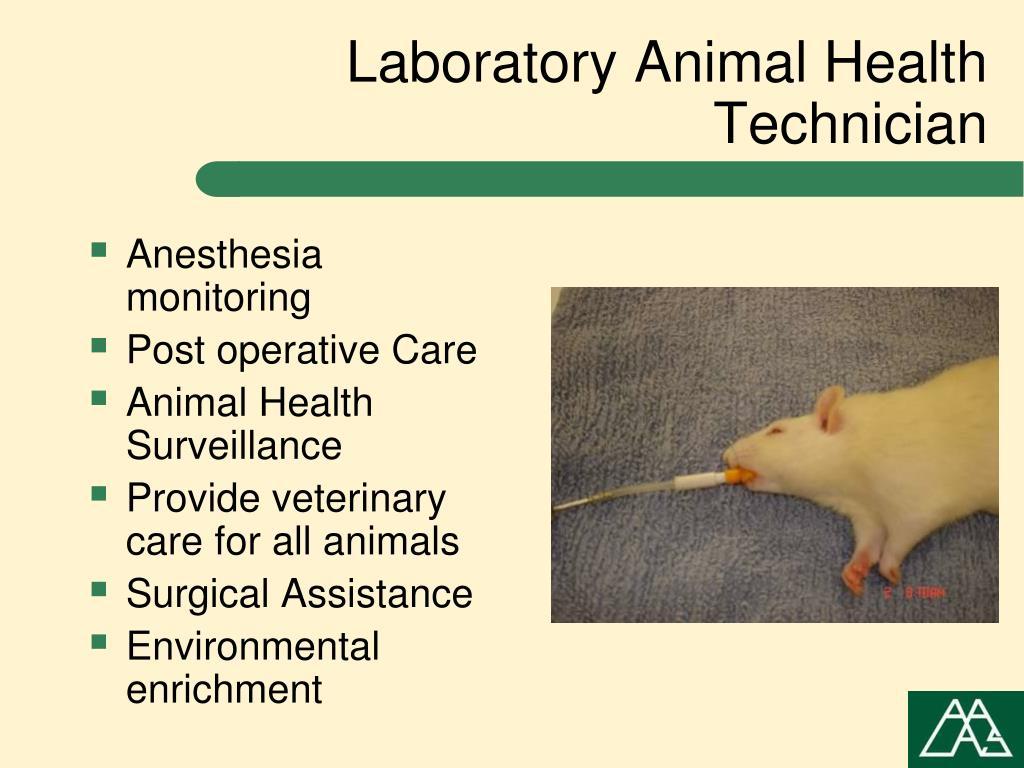 Laboratory Animal Health Technician