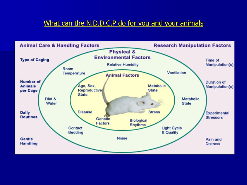 What can the N.D.D.C.P do for you and your animals