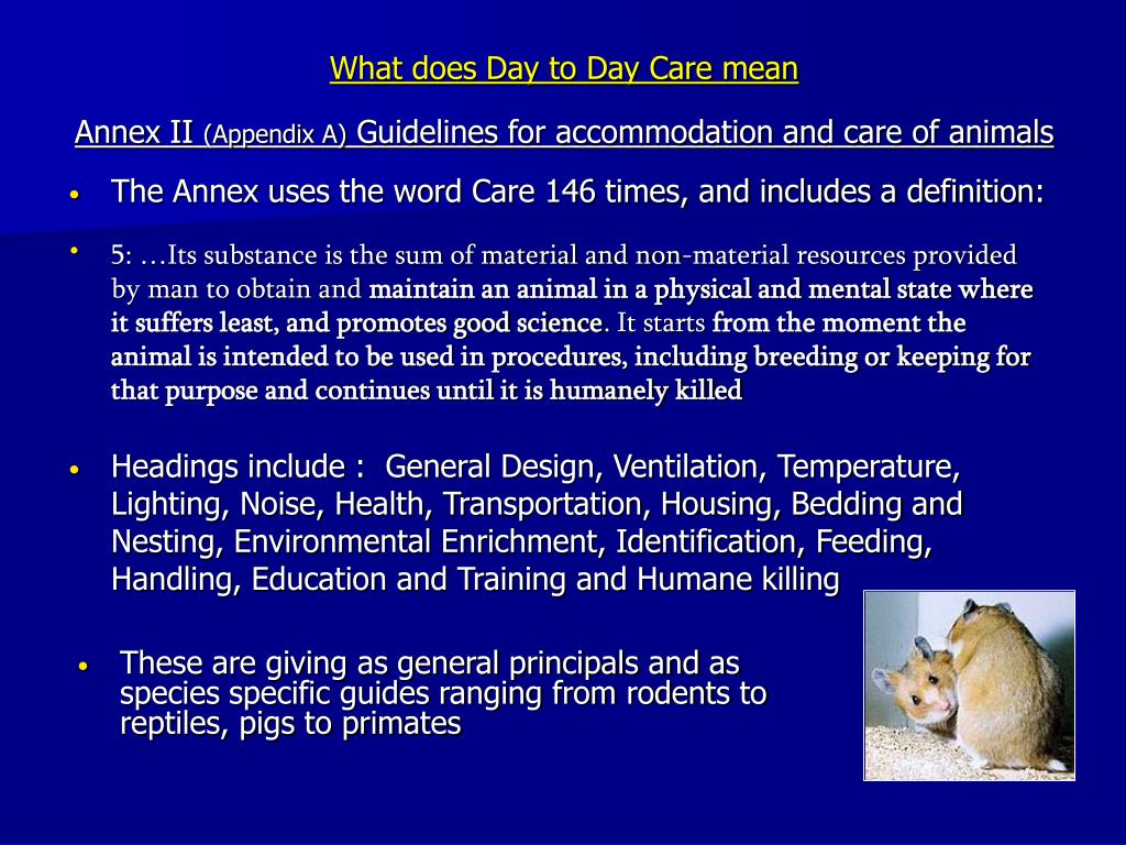 What does Day to Day Care mean