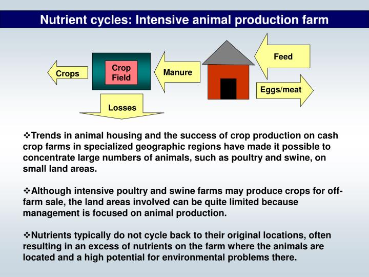 Nutrient cycles: Intensive animal production farm