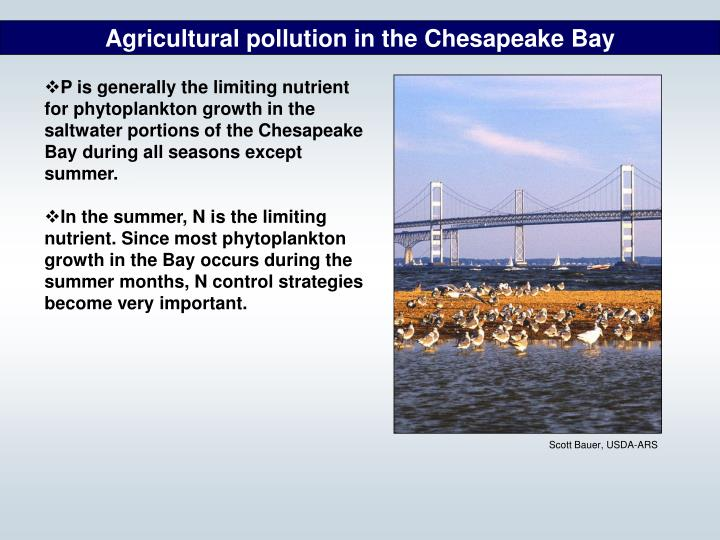 Agricultural pollution in the Chesapeake Bay