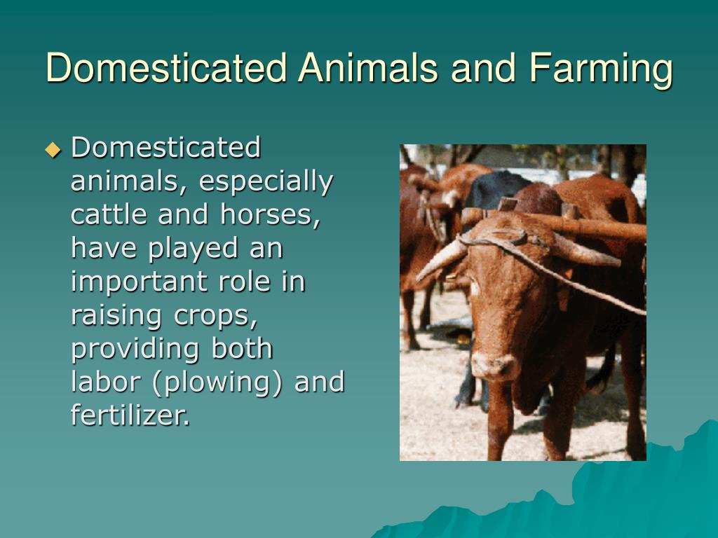Domesticated Animals and Farming